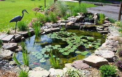 Elegir plantas para estanques algunos consejos for Como hacer un lago en el jardin