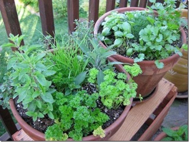 Un mini jard n de hierbas arom ticas jardindecora flores - Plantas aromaticas jardin ...
