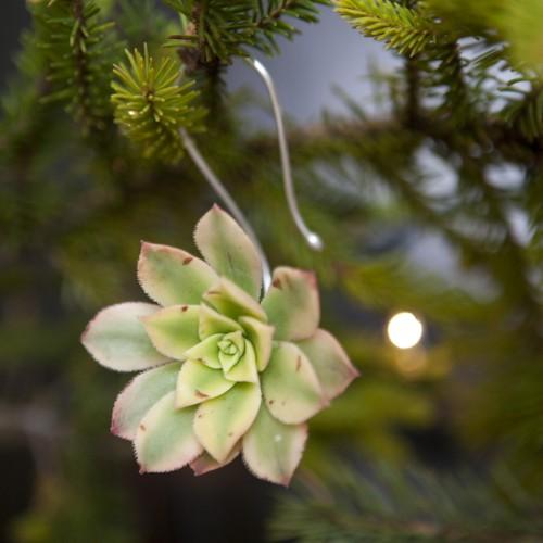 adornos de rbol de navidad con suculentas
