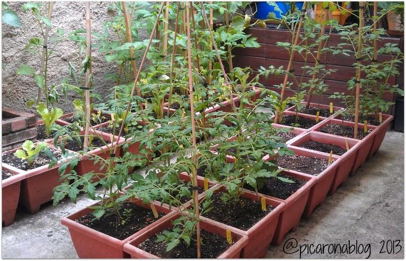 Un mini huerto urbano jardindecora flores y plantas - Huerto en casa macetas ...