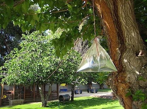 Remedio casero para ahuyentar las moscas jard ndecora - Remedio contra las moscas ...