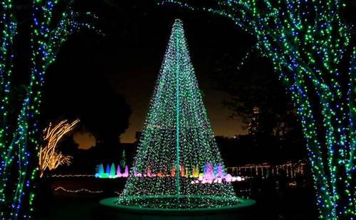 Un jardn iluminado para Navidad Fundaci Ilersis