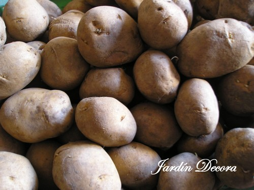 Sembrar patatas tempranas fundaci ilersis for Como cultivar patatas