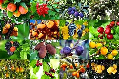 Rboles frutales en el huerto jardindecora flores y plantas for Plantas frutales