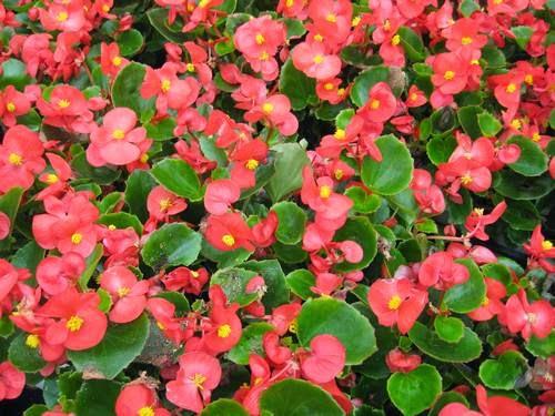 Cinco flores de verano para macetas fundaci ilersis - Plantas que aguanten el sol ...