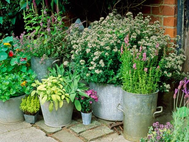 Crear un jard n de macetas fundaci ilersis for Macetas para jardin