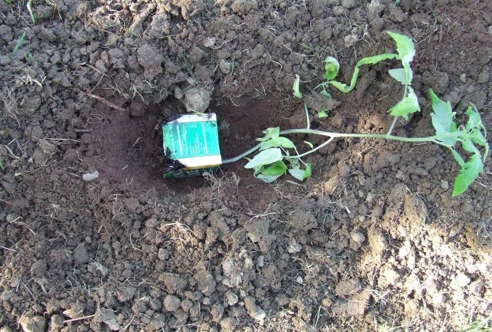 Cultivar tomates trucos de hortelano fundaci ilersis for Trucos jardineria