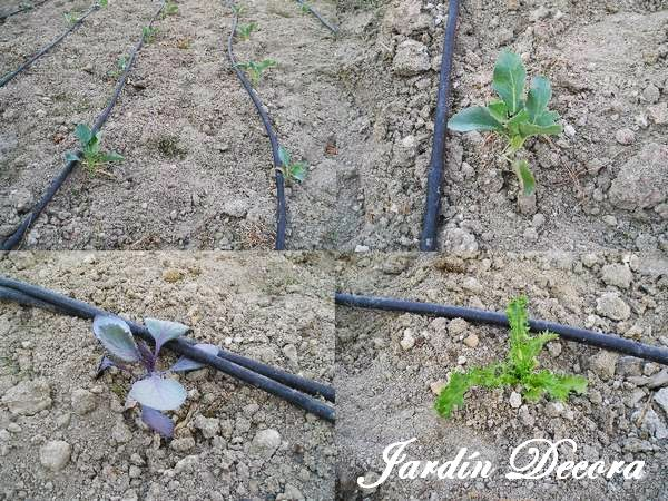Instalar un riego por goteo en el jard n fundaci ilersis for Instalacion riego automatico jardin