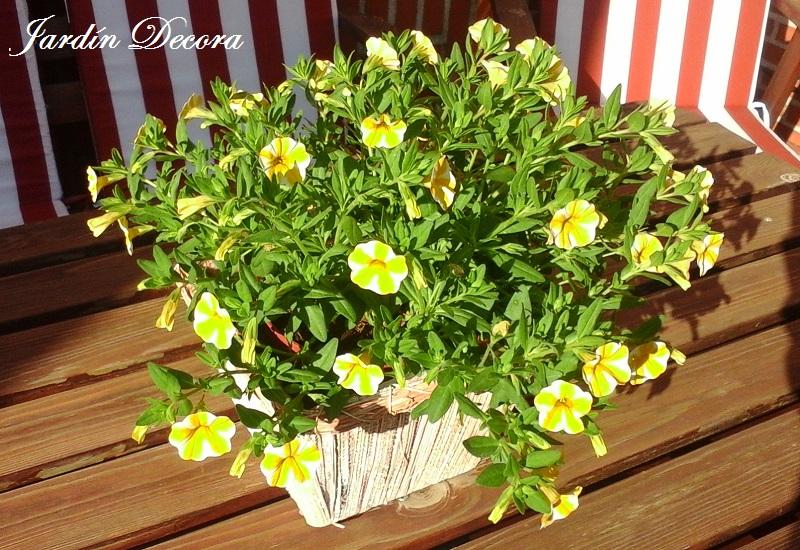 Flores y plantas a pleno sol fundaci ilersis for Plantas en jardines pequenos