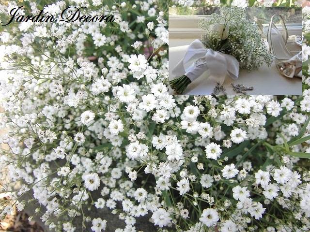 Flores y plantas a pleno sol fundaci ilersis - Plantas exterior mucho sol ...