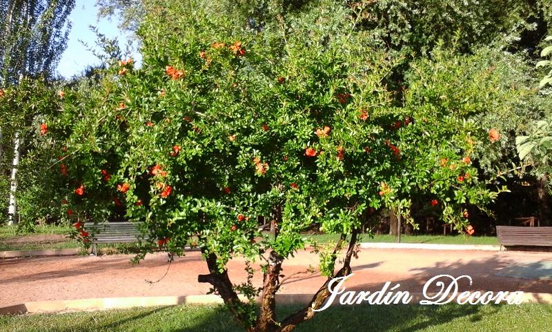 Rboles para jardines peque os el granado jardindecora for Arboles frondosos para jardin