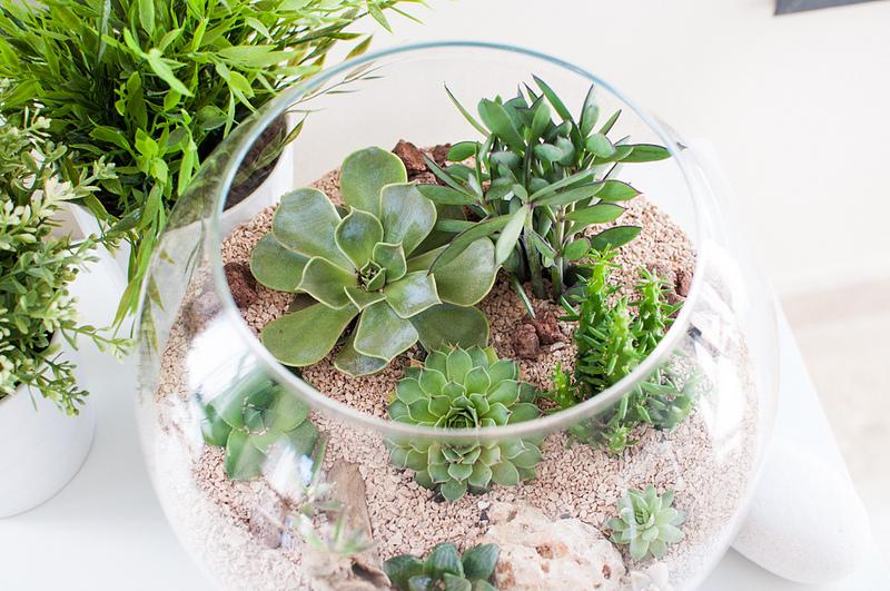 Plantas para terrarios elegir adecuadamente fundaci - Decoracion para terrarios ...