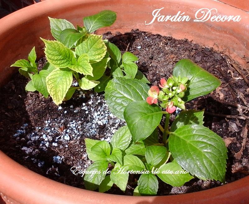 Propagar las plantas perennes jardindecora flores y plantas - Semillas de hortensias ...
