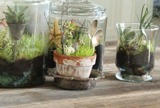 Plantas Para Terrarios Elegir Adecuadamente Fundacio Ilersis - Terrario-para-plantas