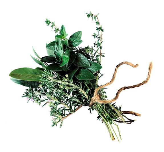 Plantas para cocinar condimentos fundaci ilersis for Plantas aromaticas para cocinar