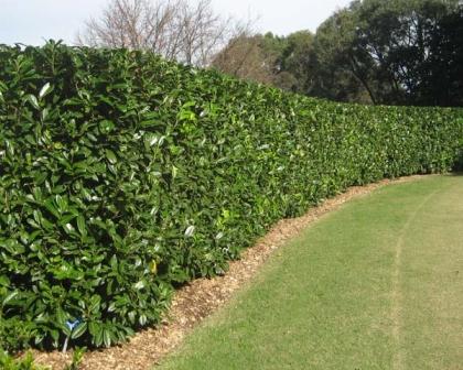 Setos para delimitar zonas del jard n fundaci ilersis - Arbustos para jardin ...