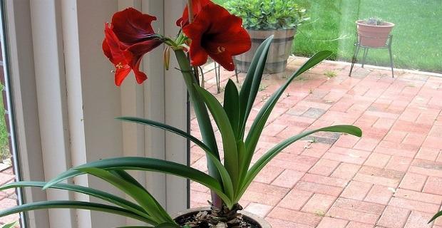 Como cuidar las plantas de interior y que no se mueran for Abono para plantas de interior