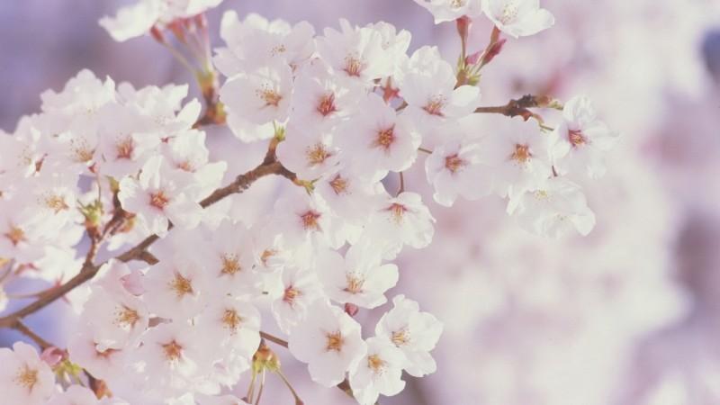 las mejores flores de primavera