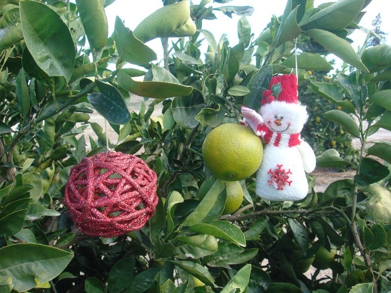 Decorar el jard n en navidad fundaci ilersis for Como decorar un arbol de jardin