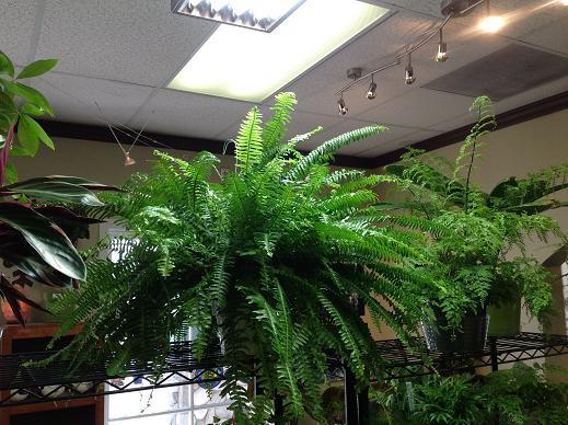 4 plantas de interior que necesitan poca luz fundaci for Plantas de interior con poca luz