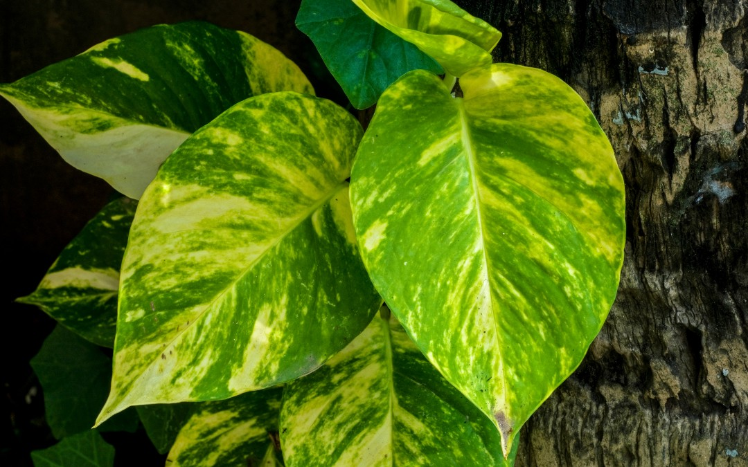 4 plantas de interior que necesitan poca luz fundaci for Planta tropical interior