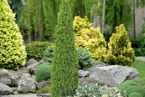 Elegir plantas para jardines de rocalla fundaci ilersis for Plantas de hojas perennes para jardin
