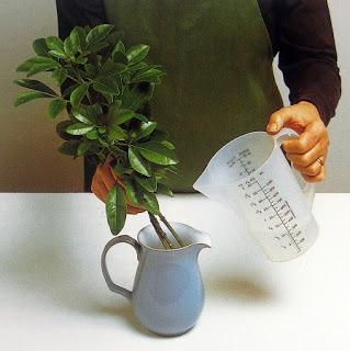 flores-secas-glicerina