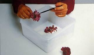 flores-secas-gel-de-sílice