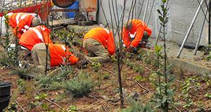 jardineria-exemple3
