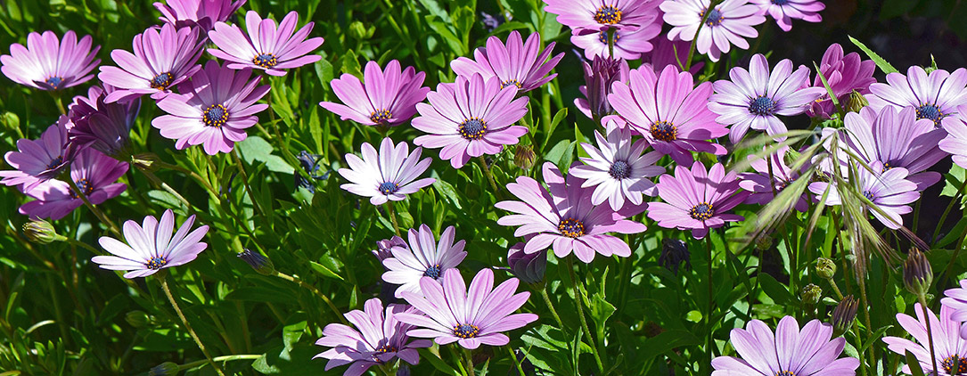 shalom_jardineria2
