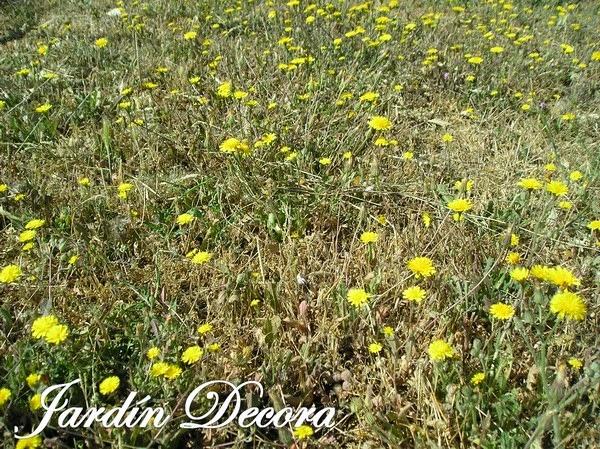 Flores Silvestres Para El Diseno De Jardines Fundacio Ilersis