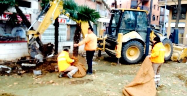 Transplante de arbolado en la Pz Pau Casals de Lleida