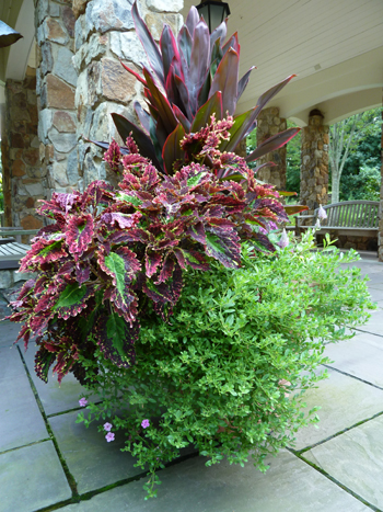 Como combinar plantas y flores en macetas fundaci ilersis for Adornos con plantas en macetas