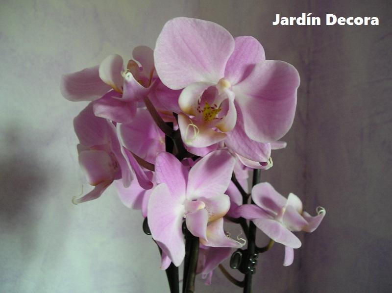 Cultivo y Cuidados de las Orquídeas en Casa