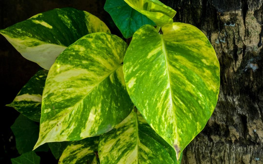 4 Plantas de Interior que Necesitan Poca Luz